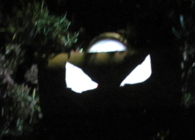 halloween 2013 022 edit